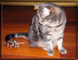 не бенгальская кошка и бенгальская мышка