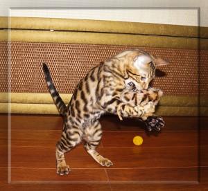 бенгальская кошка и бенгальская мышка - 2