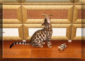 бенгальская кошка и бенгальская мышка - 6