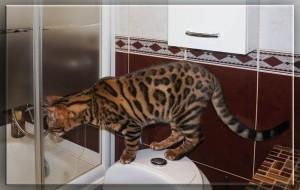 ванная-14